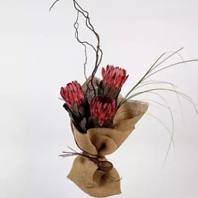 red protea brown